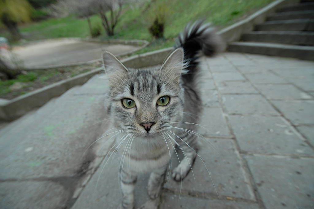 Любознательный кот