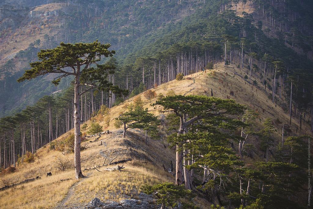 Хребет горы Ай-Петри