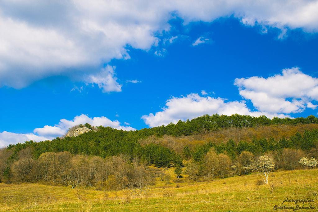 Лес Мнооречье