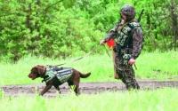 В России для служебных собак разработаны бронежилеты