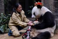 В Китае отпраздновали юбилей панды-долгожителя