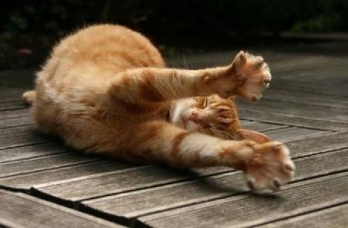 В США кошка вернулась домой после восьми лет скитаний