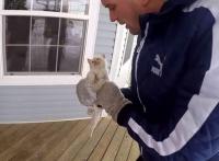 В США семья нашла замерзшего котенка и реанимировала его