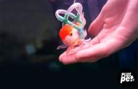 Хозяин сделал для своей рыбки спасательный жилет