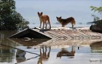 Ученые нашли родину первых собак