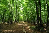 1 мая в Ялте закроют леса