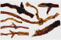 Древнейший наземный организм оказался могильщиком