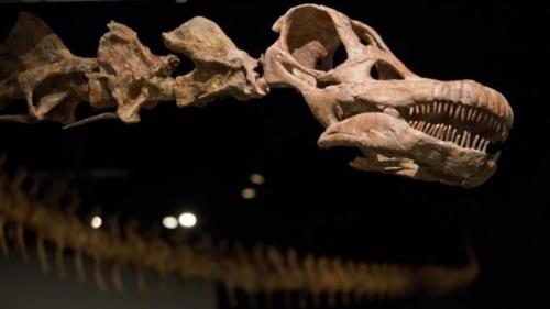 День, когда вымерли динозавры