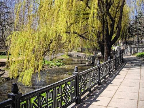 В Симферополе на набережной Салгира спилят тысячу сухих деревьев