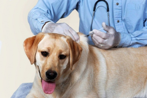 Домашним животным в Керчи 17 июня бесплатно сделают прививку от бешенства