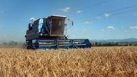 В Крыму намолотили первые полмиллиона тонн зерна