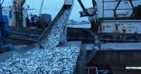 Севастополь вошел в тройку лидеров по вылову рыбы среди российских регионов
