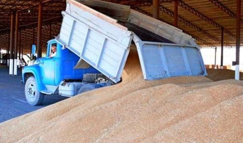 Крым собрал рекордный урожай зерна за 10 лет
