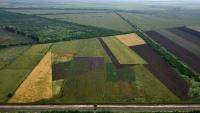 В Минсельхозе Крыма заявили о ликвидации угрозы нашествия азиатской саранчи