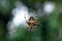Учёные обнаружили сверхпрочную паутину