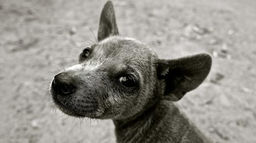 В Керчи простерилизовали 170 бродячих собак