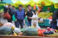 В Симферополе заработают ярмарки выходного дня