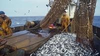Улов керченских рыбаков сократился на четверть