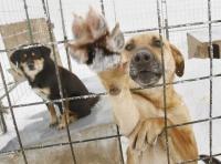 За последние два месяца в Керчи отловили более 300 бездомных животных