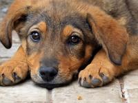 До конца года в Евпатории стерилизуют более тысячи бездомных собак