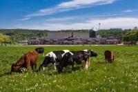 Крымских фермеров накажут за самостоятельное уничтожение трупов животных