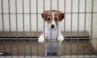 В Симферополе всё-таки построят приют для безнадзорных животных