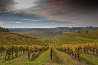 Господдержка виноградарей Крыма в 2018 году сохранится на уровне этого года