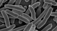 Микробиом расскажет о болезнях человека