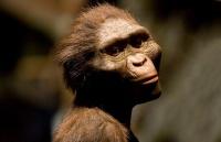 Предки человека могут оказаться на 10 млн лет древнее, чем считалось ранее