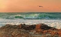 В Ялте открылась выставка «Влюбленные в море»