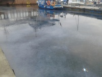 В Балаклаве из-за медуз море превратилось в кисель
