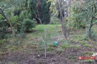 В Ялте планируют создать карту восстановления зеленых насаждений