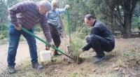 В Ялте провели высадку деревьев в парке «Чукурлар»