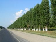 Высадка зеленых насаждений вдоль «Тавриды» обойдется в 220 млн рублей
