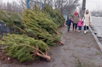 В Симферополе рассказали, что сделают с использованными новогодними елками