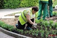 В 2017 году в Ялтинском регионе высадили почти 65 тысяч единиц цветочной рассады