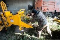 В Севастополе появится новая техника для утилизации новогодних елок