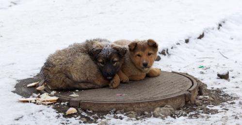 В Крыму выделили 29,5 миллиона рублей на стерилизацию бездомных животных в этом году