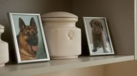 В Симферополе откроется крематорий для животных
