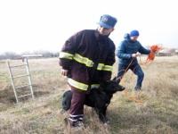 В Керчи спасатели достали собаку из глубокой ямы