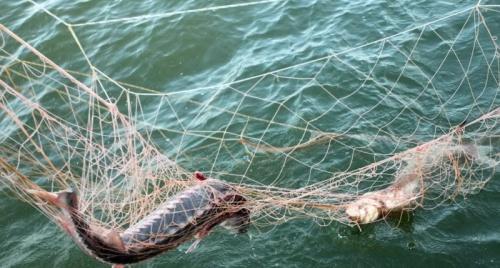 Рыболовам Севастополя выделят 5 млн рублей субсидий