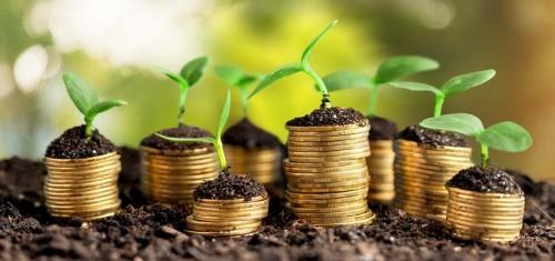 Инвестиции в сельское хозяйство Севастополя за год превысили 1 млрд рублей