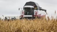 В Крыму хотят создать хаб для поставок зерна в Сирию