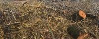 К Первомаю в центре Симферополя помоют мусорные баки и уберут спиленные ветки