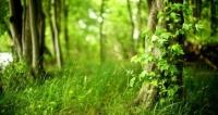 Вокруг Симферополя пытаются сделать «зеленый пояс»
