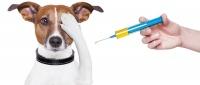 28 апреля в Симферополе пройдет еще одна бесплатная вакцинация животных