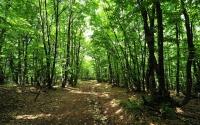Власти Симферополя запретили въезд в лесопарковые зоны