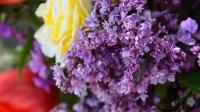 В Никитском ботаническом саду зацвела «Сирень Победы»