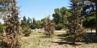 Симферопольцы жалуются на засохшие деревья в парке им. Гагарина