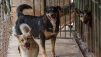 В этом году в Крыму стерилизуют 7,5 тыс бездомных животных